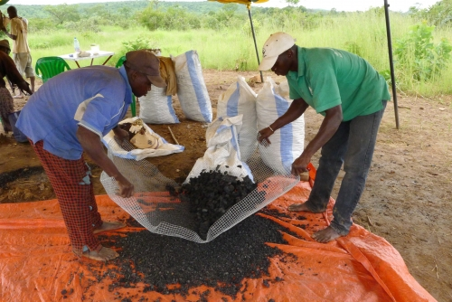 Launch pilot to produce sustainable charcoal